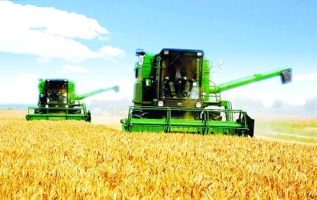 小麦联合收割机驰骋在丰收的原野上 郑文 摄