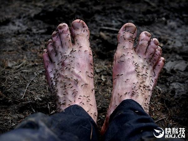 密集慎入!摄影师赤脚吸引数百只蚊子:太恐怖