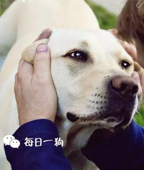 如果狗狗做了这些动作,代表它有事告诉你!