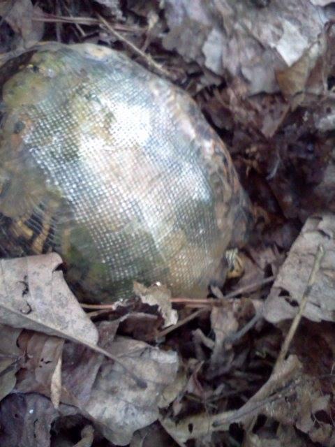 车祸导致龟壳破裂,有了玻璃纤维制成的龟壳,乌龟健康活着。( Hocking Hills Animal Clinic脸书)