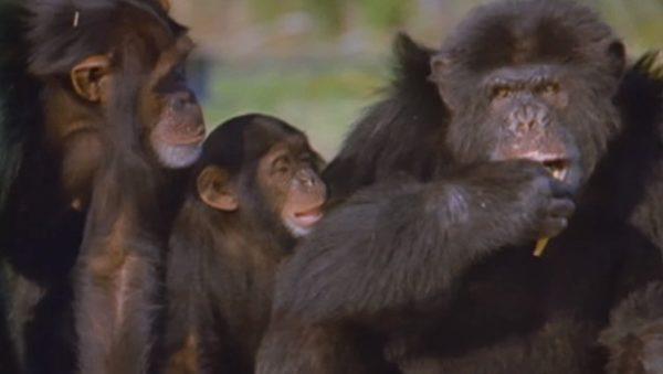 NTD-monkey-1-9_resized