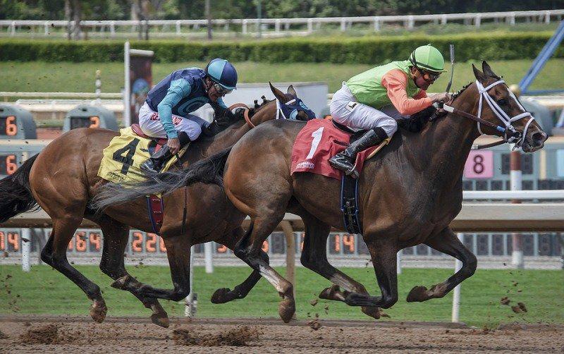 導致賽馬贏和輸的因素其實都是可以數學量化的