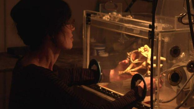 格恩瑟不得不采取保护措施,在一个透明的塑料箱内打磨贝壳。
