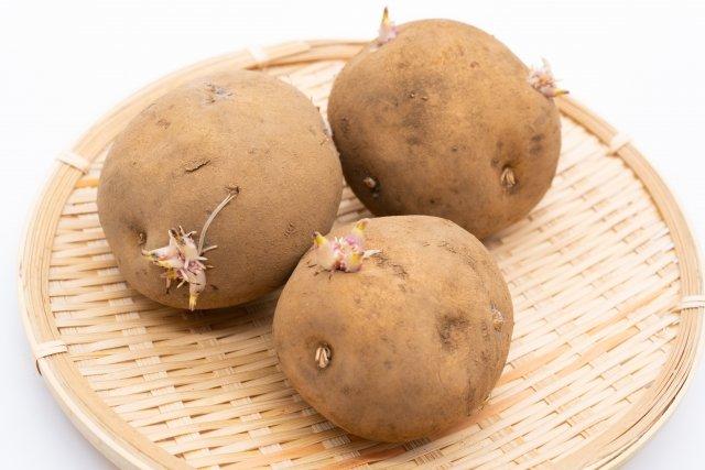发芽土豆   (图片:photoAC)