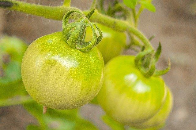 青西红柿   (图片;pixabay)
