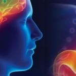 """科学家在人身上发现了""""第二个大脑"""""""