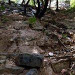 天坛公园引进洋草致古树淹死